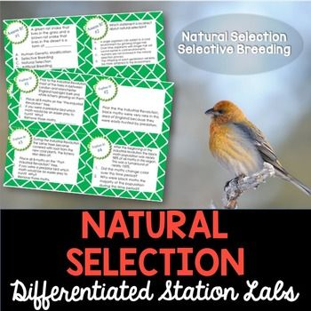 Natural Selection and Selective Breeding Student-Led Station Lab: Natural Selection and Selective Breeding Lab - Students will love you for providing them with a hands-on experience when learning about the process of natural selection and selective breeding.