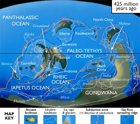 Silurian, 443-417 Ma ago: con-tinental positions did not change much in the Early Silurian. But, during the Middle & Late Silurian, Siberia moved N, Laurentia headed SE, & Gondwana continued to stretch from the Equator to the South Pole. Although it remained almost entirely w/in the S Hemisphere, Gondwana shifted enough to put N SA over the South Pole instead of AF. The massive S Hemisphere glaciers that had formed during the Late Ordovician began melting, & Earth's climate became relatively…