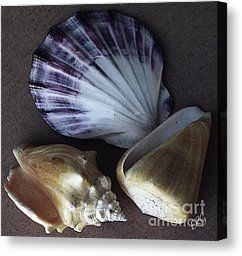 Seashells Spectacular No 30 Photograph by Ben and Raisa Gertsberg - Seashells Spectacular No 30 Fine Art Prints and Posters for Sale