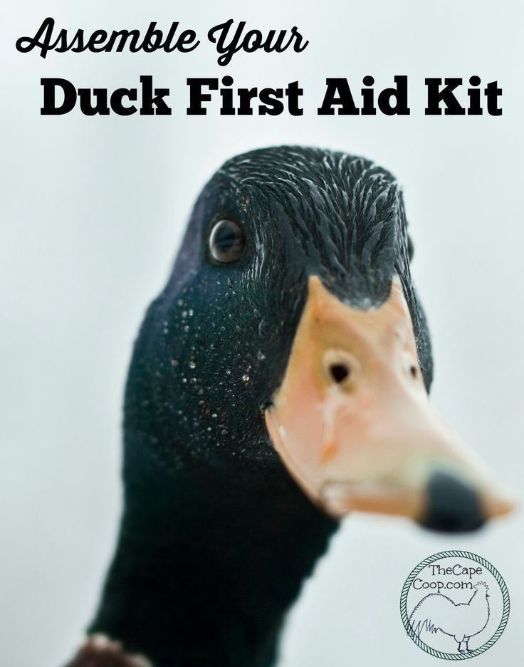A well stocked first aid kit is something every responsible animal owner should have. What items do you need in your duck first aid kit?