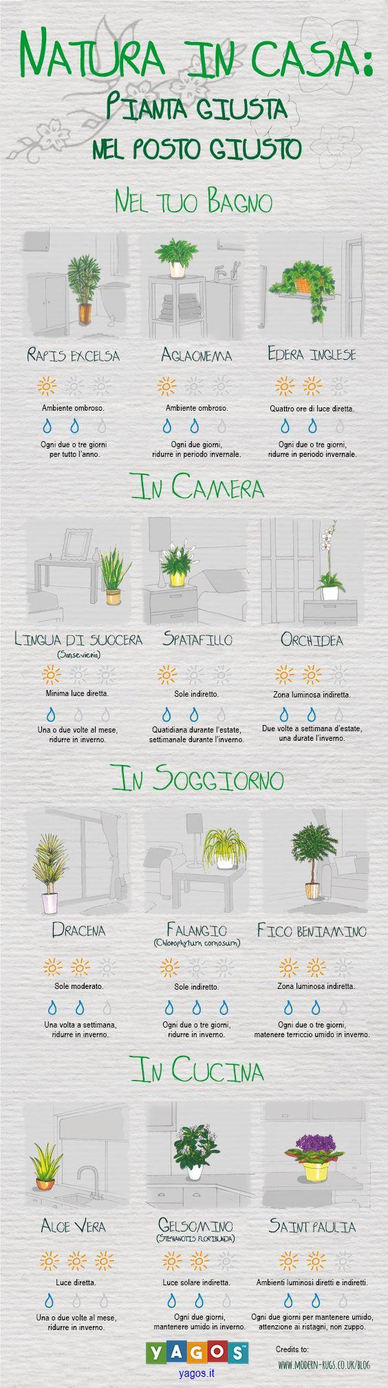 Scopri quale pianta è più adatta ai tuoi ambienti di casa.