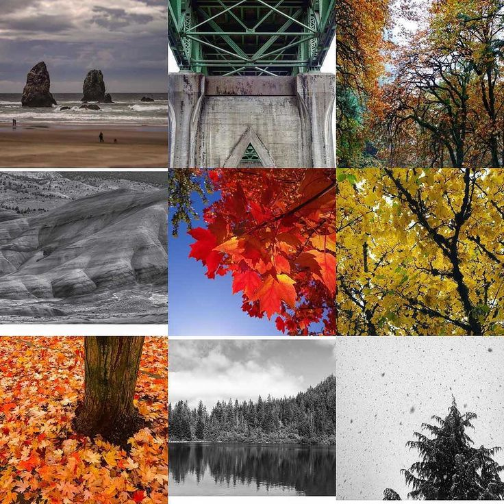 What a year it has been.. thanks you all for taking time to look at my pictures and leaving a comment so now and then... #best9 #nicemix #colourful #blackandwhite #oregon #pnw #pnwonderland #upperleftusa #trees #leaves #oregoncoast #canonbeach #forestheights #stjohnsbridge #mirrorlake #mybackyard #usa #thanks #thankyouforcoming