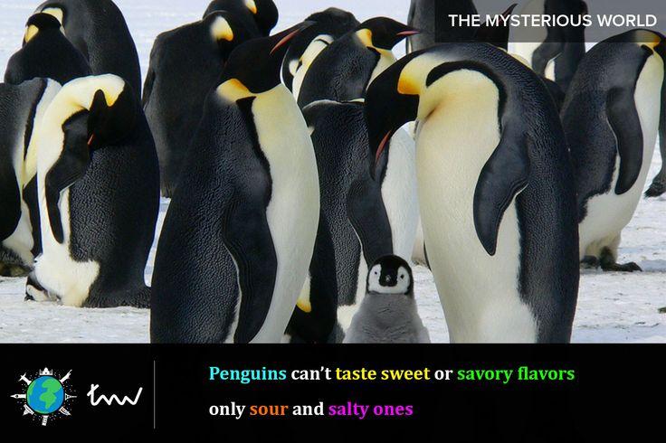#animals #penguin #facts