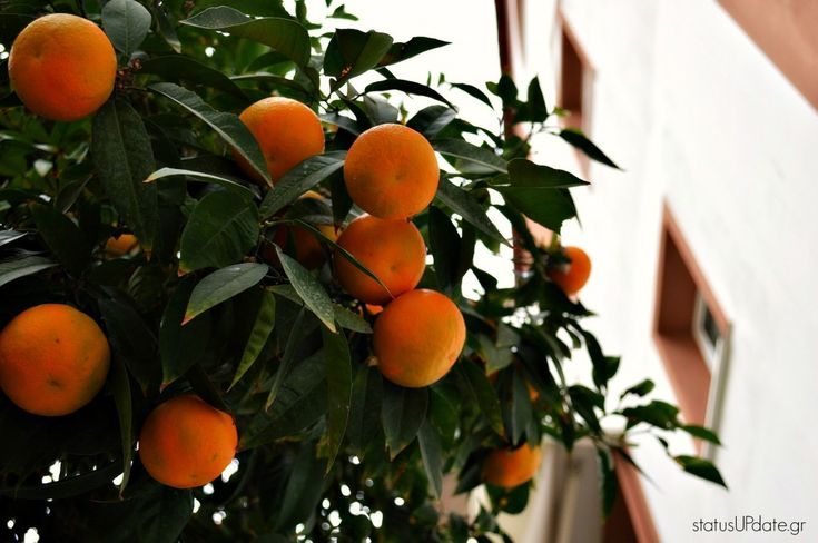 #moments #bitterorange #orange #citylife