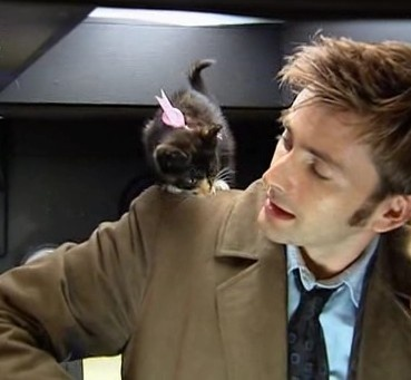Another ovary-exploding Gridlock kitten picture. You're quite welcome!