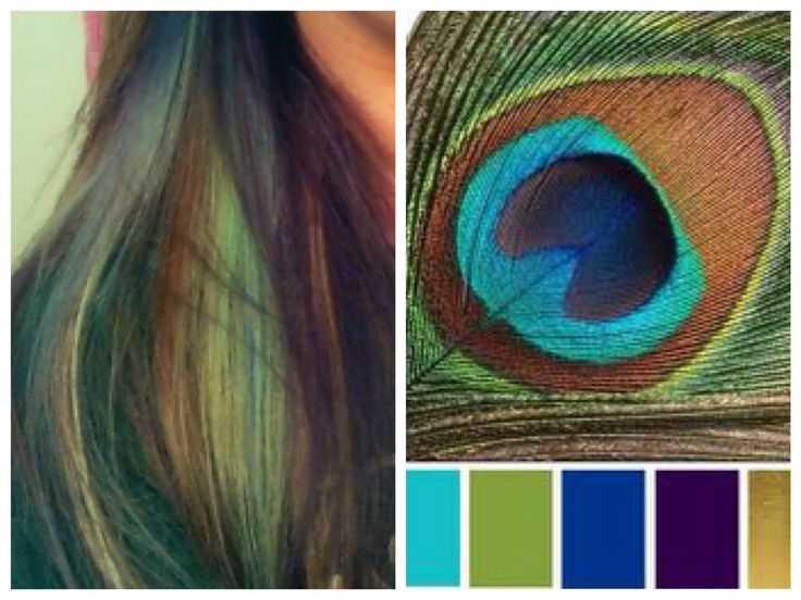 Peacock Peek A Boo Highlights Peacock Hair Highlights