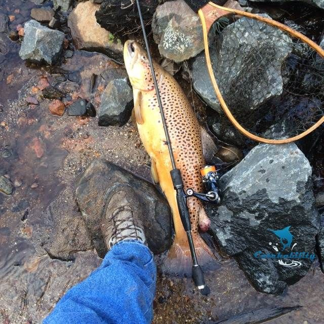 Brown trout caught by Stephen Wilson