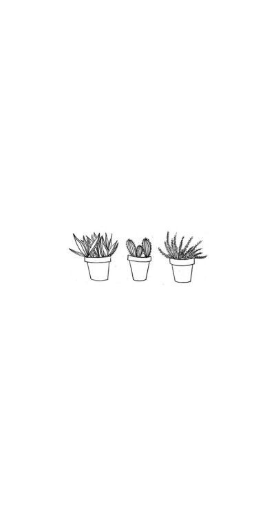 Plant Twitter Header  iPhone background | wallpaper