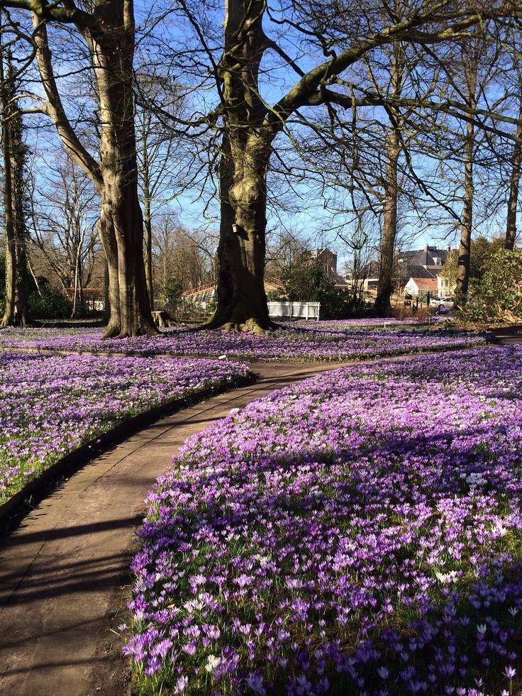 Lente, Noorderpark, Assen, Drenthe.