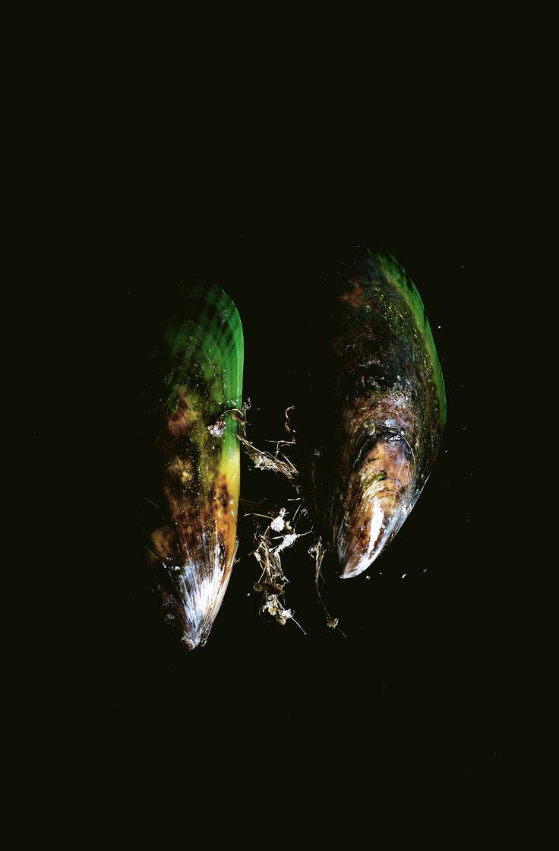 New Zealand green mussels