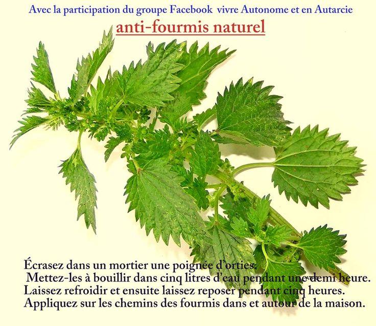Anti Fourmis Naturel Maison