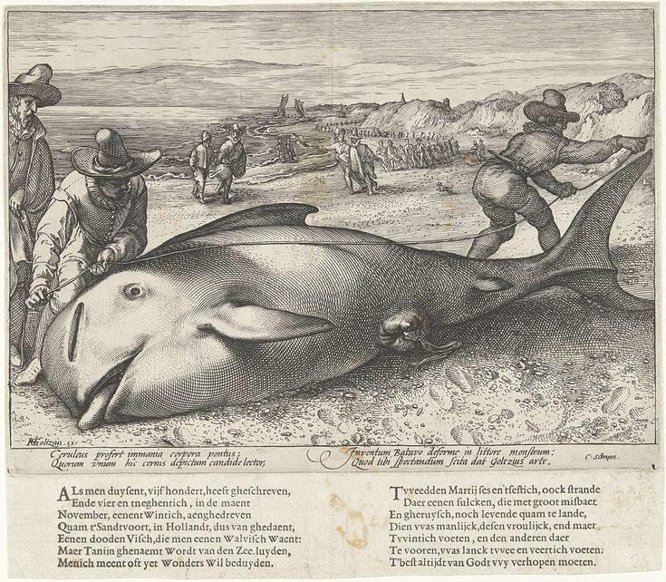 Hendrick Goltzius   Gestrande griend op het strand bij Zandvoort, 1594, Hendrick Goltzius, 1594   Twee mannen nemen de maten van een griend, een kleine walvis, gestrand bij Zandvoort, 21 november 1594. Op het strand meerdere toeschouwers. Met onderschrift van 4 regels in het Latijn. Apart gedrukt onder de plaat 2 verzen van elk 7 regels in het Nederlands.