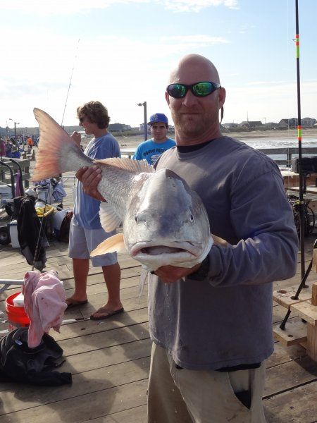 Red drum fishing outer banks obx fish portraits for Outer banks fly fishing
