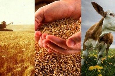 Присоединитесь к чату Google Hangouts:  Сельское Хозяйство и Продукты Питания [Продукция и Поставщики]