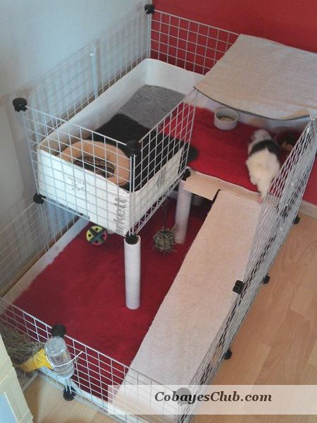 cavy cage cochon d 39 inde piggies cavy guine pig pet cage