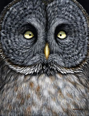 Extraordinarily Beautiful Owl...Ive never seen one like this...Know the name fellow pinners? So very different!