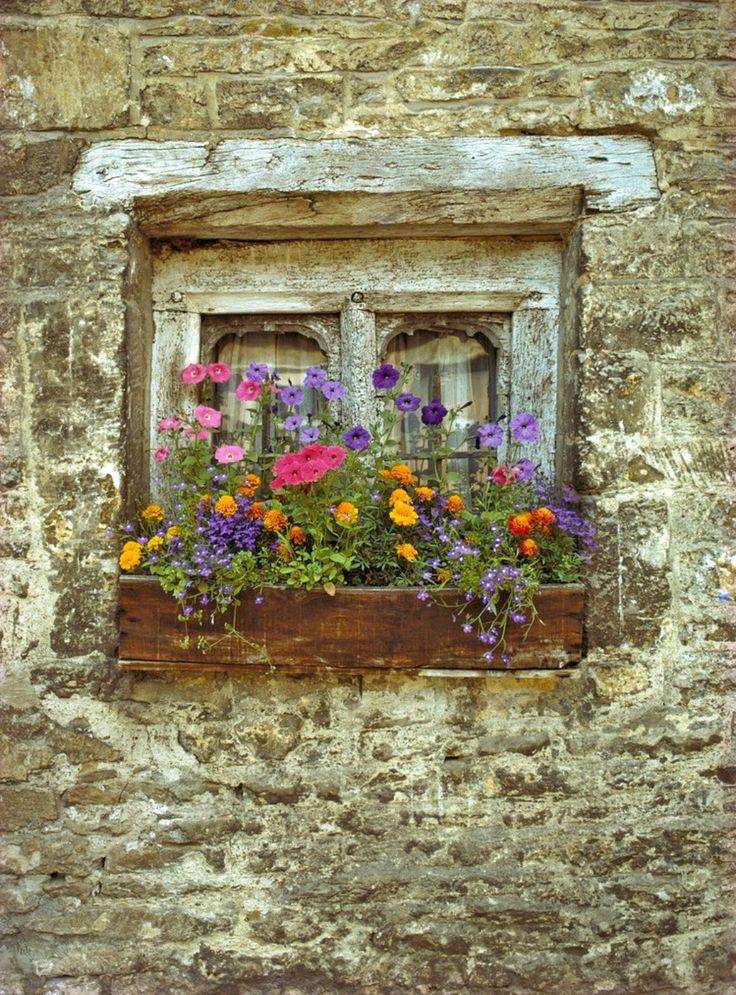 English window box by Stephen dosRemedios