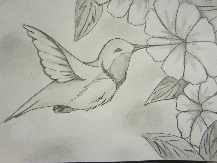 Humming bird scetch