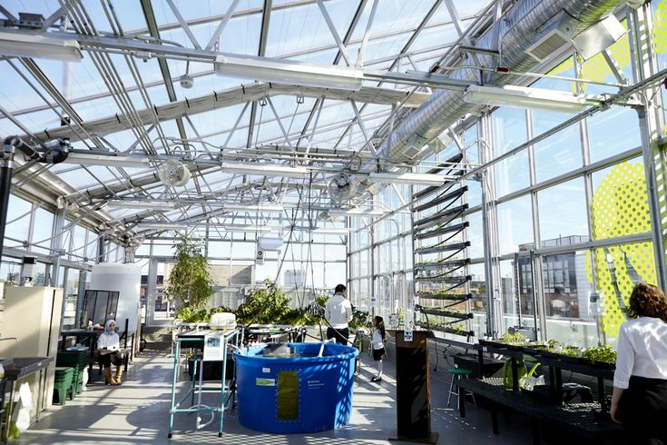 Williamsburg's PS 84 opens high-tech hydroponic rooftop greenhouse | Inhabitat New York City