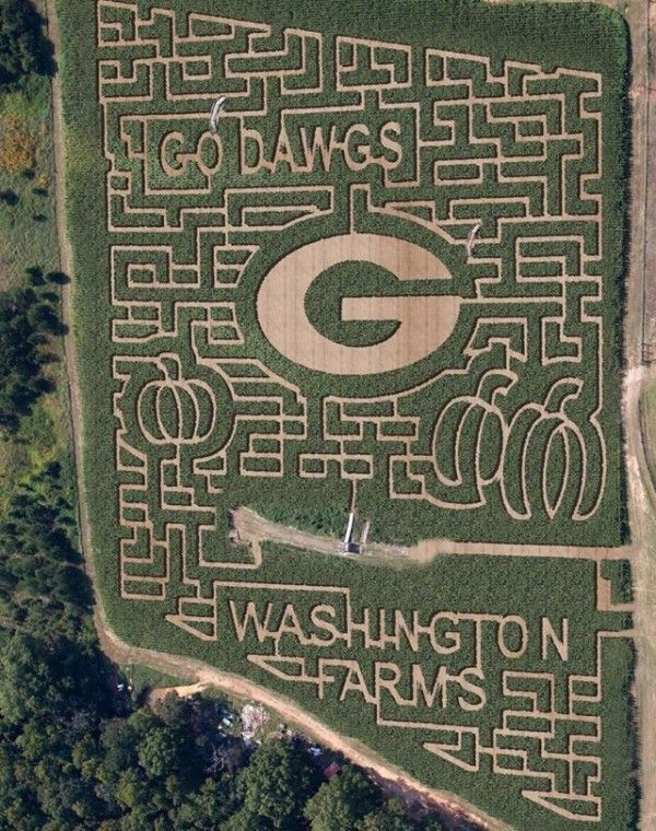 7 Amazing Corn Mazes To Visit In Georgia This Season Georgia Dawgs Dawgs Corn Maze