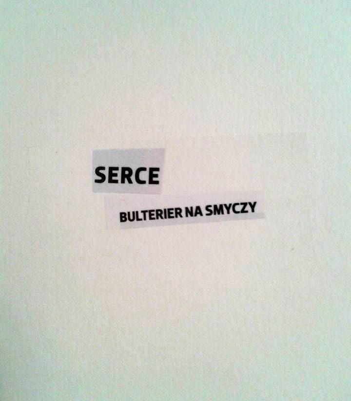 Serce. Bulterier na smyczy.