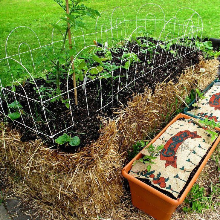 107 best images about straw bale gardening on pinterest squash plant raised beds and plants for Best plants for straw bale gardening