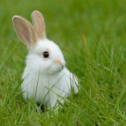 Ce lapin est parfait!!! Qui est d'accord??