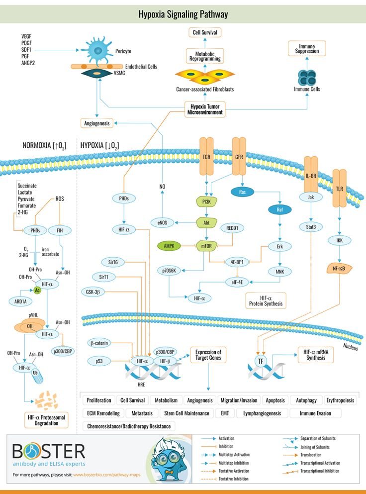Pin by on Cell Signaling Pathways in 2020