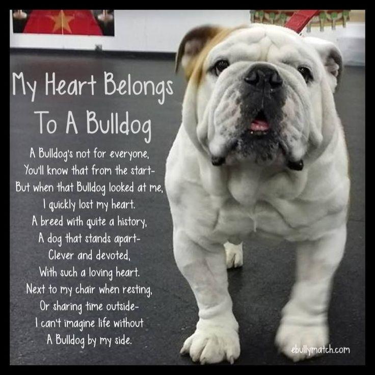 My Heart Belongs To A #Bulldog