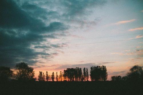 Imagen de sky, sunset, and tree