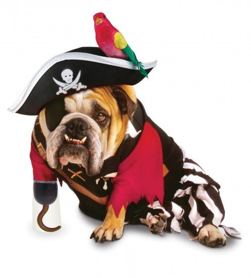 Bulldog Pirate Costume