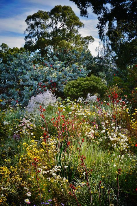 the 1498 best australian native gardens images on pinterest