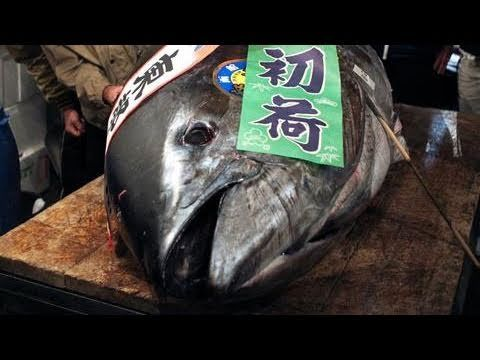 A bluefin tuna fetched a record 32.49 million yen (~ $396,000 USD) in the first auction of the year at Tokyo's Tsukiji market on Wednesday…    The 342-kilogram tuna was bought by a joint bid by the owners of Itamae Sushi chain in Hong Kong and the Ginza Kyubey restaurant in Tokyo.