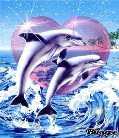 Dolphins                                                                                                                                                                                 More