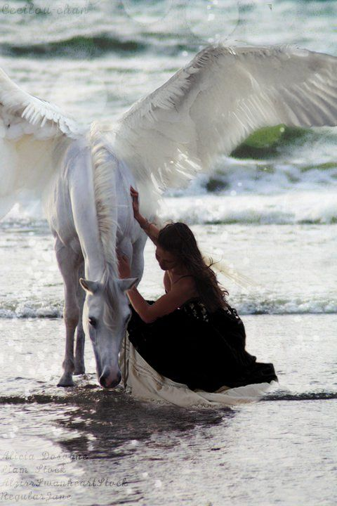 Pegasus loved the innocent girl so much he came to the beach every day so she could stroke him. He knew their love was impossible, but he couldn't help falling for her.