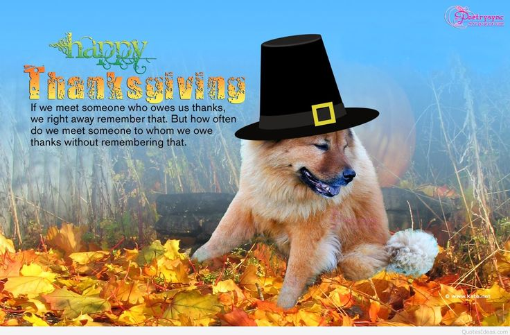 Happy Thanksgiving Everyone! Have a PAW-some time😍😇 #Thanksgiving #dogs #doglovers #petowners #family  https://www.facebook.com/FidoActive/