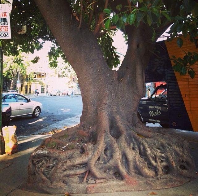 Caminando en la colonia Roma (cd de México) me tope con este árbol, parece que es de una película de Tim Burton!!