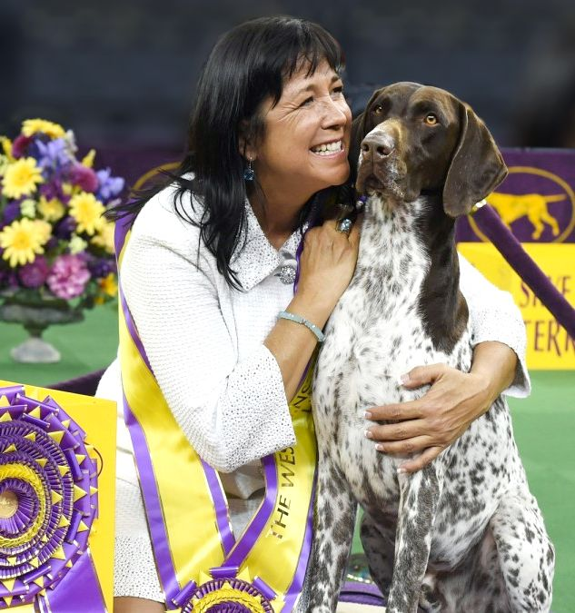 Westminster Dog Show 2016: CJ the German Shorthaired Pointer Wins Best in Show http://www.forbes.com/sites/kristintablang/2016/02/16/westminster-dog-show-2016-cj-german-shorthaired-pointer/#6b63530b7559