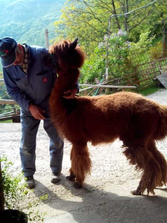 Expo Veneto: A day in Lessinia. Walking with Alpaca. - Events