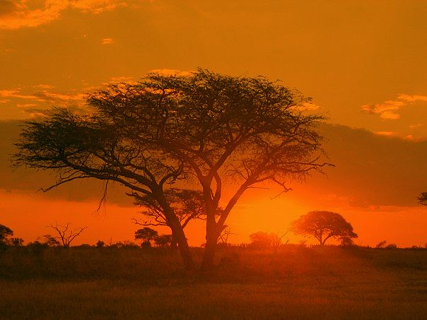 Google Image Result for http://upload.wikimedia.org/wikipedia/commons/5/5e/Sunrise_Matobo_Zimbabwe.jpg