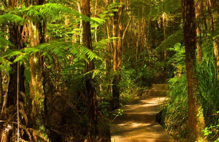 Okura Bush walk Long Bay