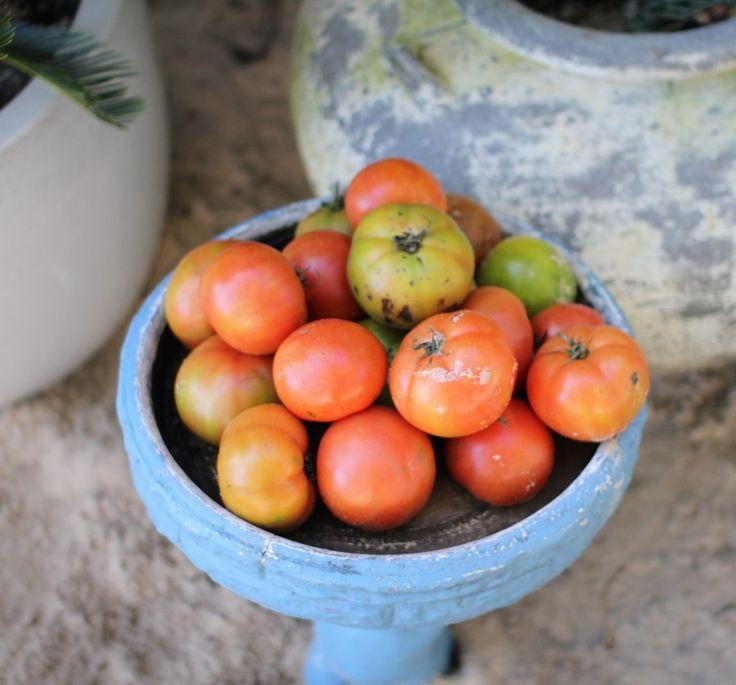 Boathouse - Balmoral Beach - My Kiki Cake - Sydney Food Blog - Tomatoes
