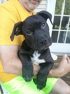 Dallas Ga Pit Bull Terrier Meet Esther A Dog For Adoption
