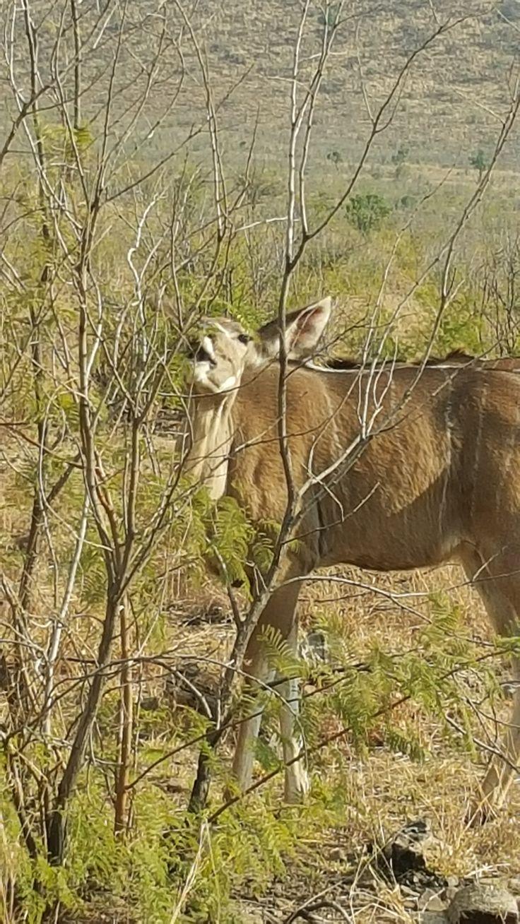 *20/08/2016* Kudu