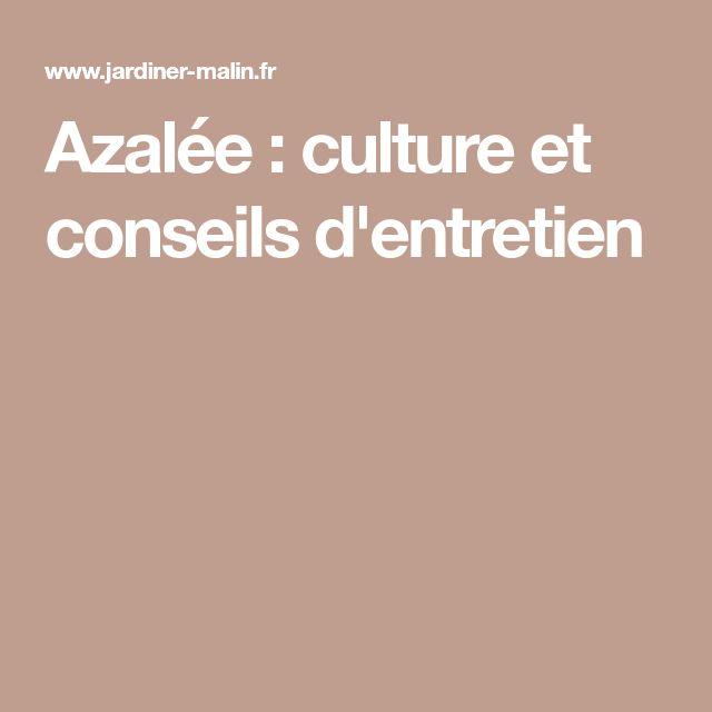 Azalée : culture et conseils d'entretien