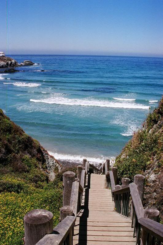 Big Sur, California- Sand Dollar
