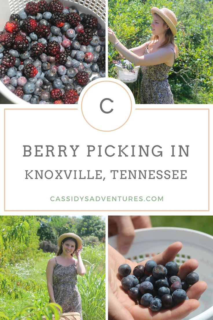 Berry picking is a fun  and cheap summer activity for all ages. On the outskirts of Knoxville, Tennessee, there is the Fruit and Berry Patch. Depending on the season, you can pick blueberries, blackberries, peaches, and - in the fall - apples. Hop on over to Cassidysadventures.com to check it out.