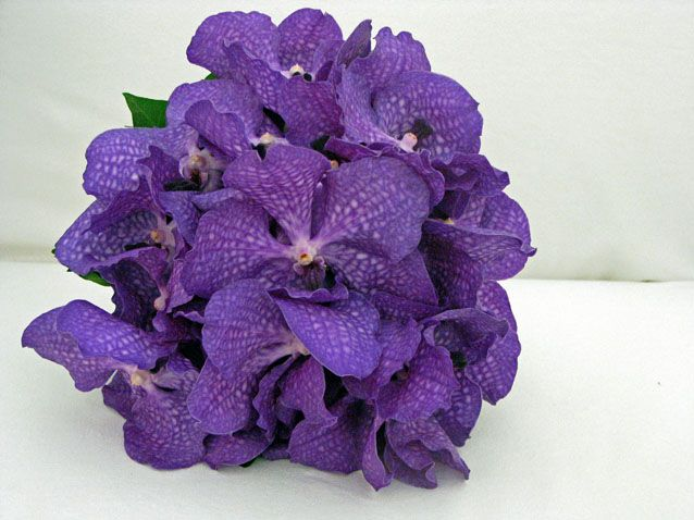 Google Image Result for http://www.bouquetweddingflower.com/wp-content/uploads/2011/06/purple-vanda-orchids-bouquet.jpg