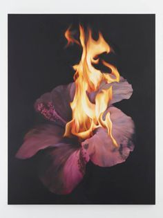 burnt flowers photographer - Google Search