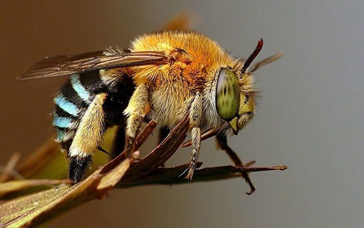 As abelhas não estão se adaptando bem às mudanças climáticas. Estes insetos cruciais para polinização estão morrendo, de acordo com estudo divulgado...